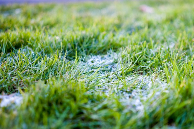 frosted-grass