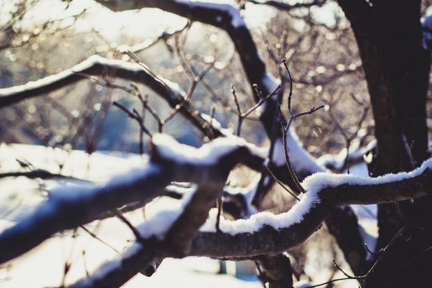 tree-sun-snow-85170
